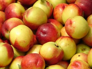 Nectarines
