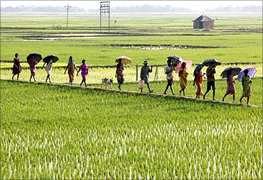 People walk through paddy fields in West Bengal.